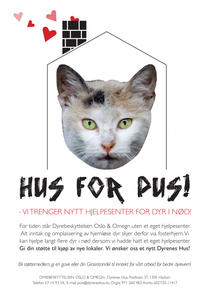 flyers-hus-for-pus2