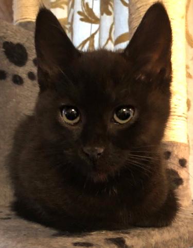 Pedro på kloretårn, søt kattunge med bena under seg. Bilde forfra.