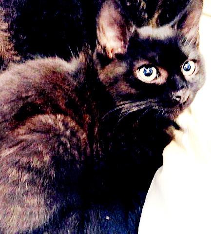 Pedro kattunge på 3 mnd
