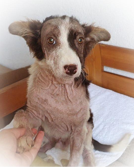 Hunden Emil sitter i en seng og har høyre labb i en menneskehånd. Han ser litt redd ut og har ørene ned og ut til siden. Han har brune ører og brun pels rundt øynene. Snuten  er brun med hvit pels rundt som går opp mellom øynene. Store brune øyne ser på deg og han ser engstelig ut. Resten av kroppen har veldig lite pels. Du ser bare skrukkete hud.