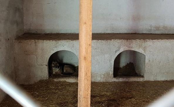 Bildet fra et rom i shelteret. Det er et hvitt mur rom med tå små lave murbåser i enden av rommet. Det er lave åpninger med buet topp. I i det venstre lille rommet, ligger det en brun og hvit hund og ser ut.
