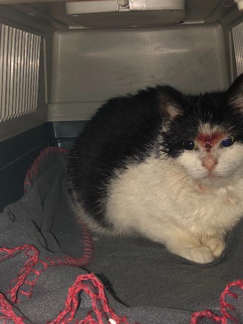 Katten Ulla sitter på et grått fleeceteppe med rød søm på kantene inne i et grått transportbur. Hun har trukket seg sammen til en ball og ser redd ut. Hun er hvit på forkroppen og i ansiktet og er sort på toppen av hodet og bakkroppen. På nesen har hun et blodig sår som går opp til over øynene. Hun har gule øyne og store pupiller som tyder på at hun er redd og stresset.