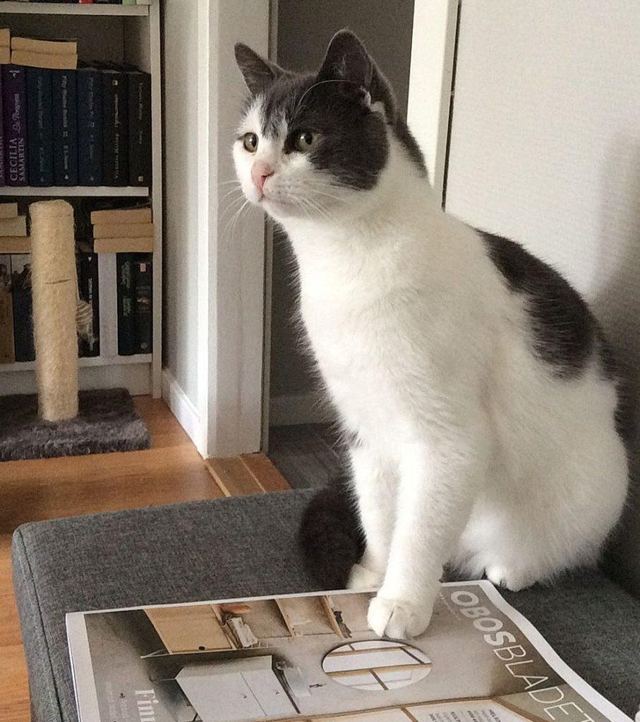 Sheeba sitter i sofaen med ene poten på et Obosblad. I bakgrunnen er det en bokhylle og foran den står det et lite kloretårn.