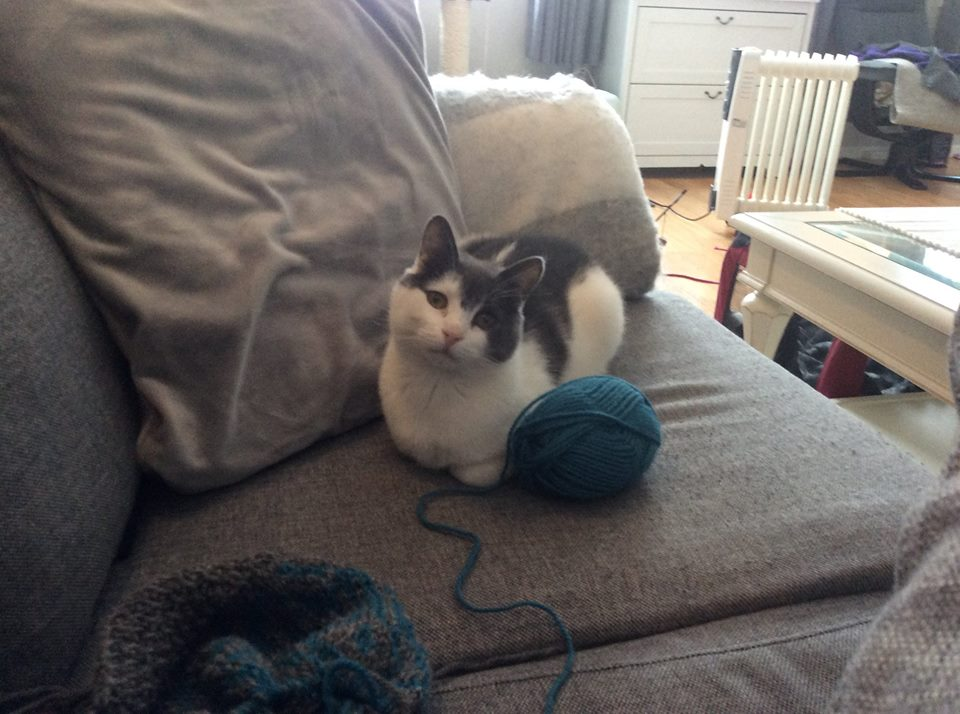 Sheeba ligger i en grå sofa med labbene under seg. Det er et blått stort garnøste foran henne og et strikketøy.