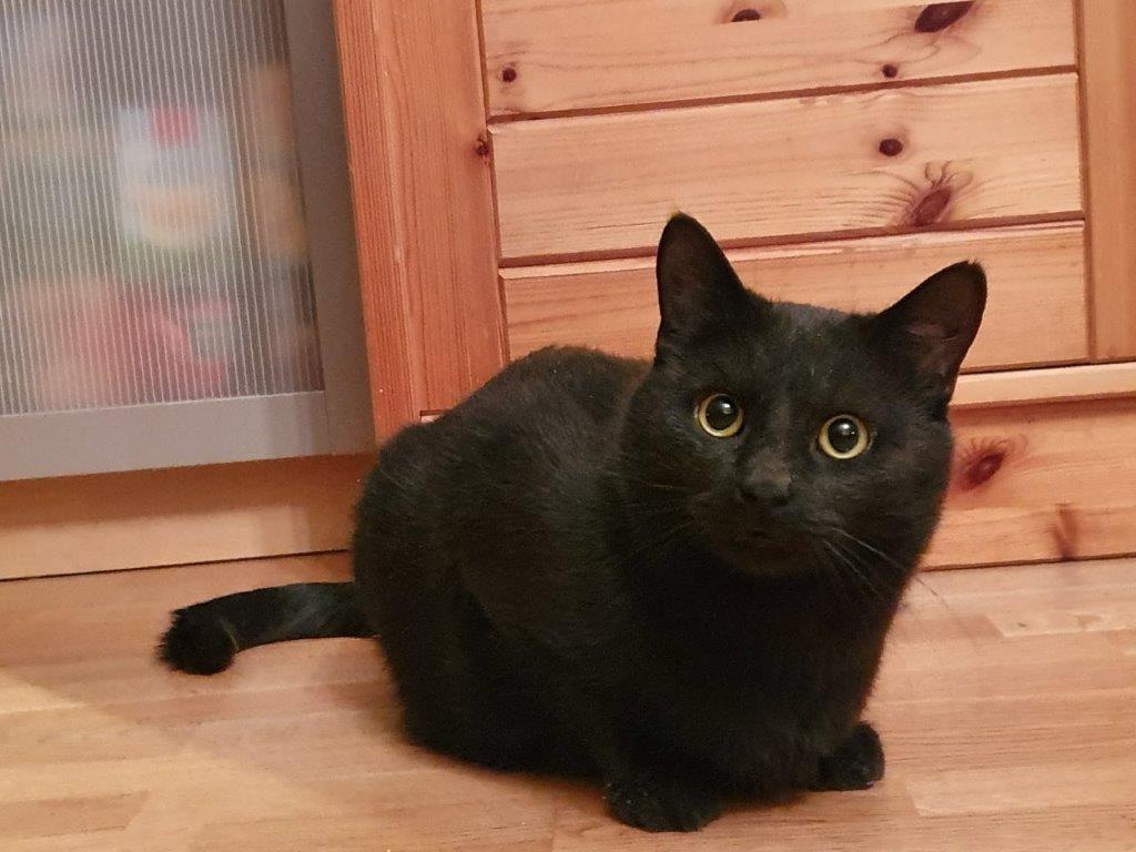 Lille Busse sitter på gulvet og ser opp. Han er ravnsort med gule øyne og store runde pupiller.
