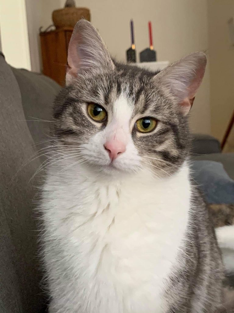 Pimento sitter i sofaen og ser rett på oss med sine vakre gule øyne. I bakgrunnen skimtes  litt av leiligheten og 2 stearinlys på en hylle.