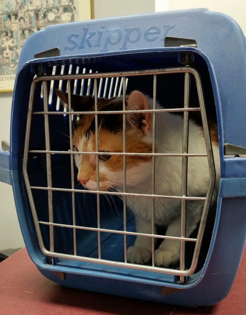 En katt i et transportbur.