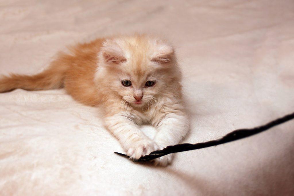 En lys kattunge leker med en fjær.