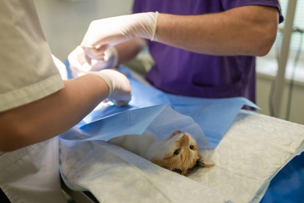 En katt på operasjonsbordet