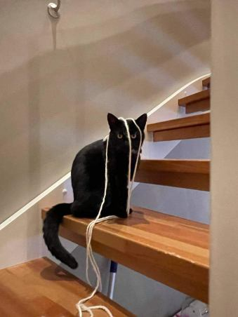 Elvira sitter på et trappetrinn i en trapp. Hun har hvit tråd over hodet og ser rett i kameraet.