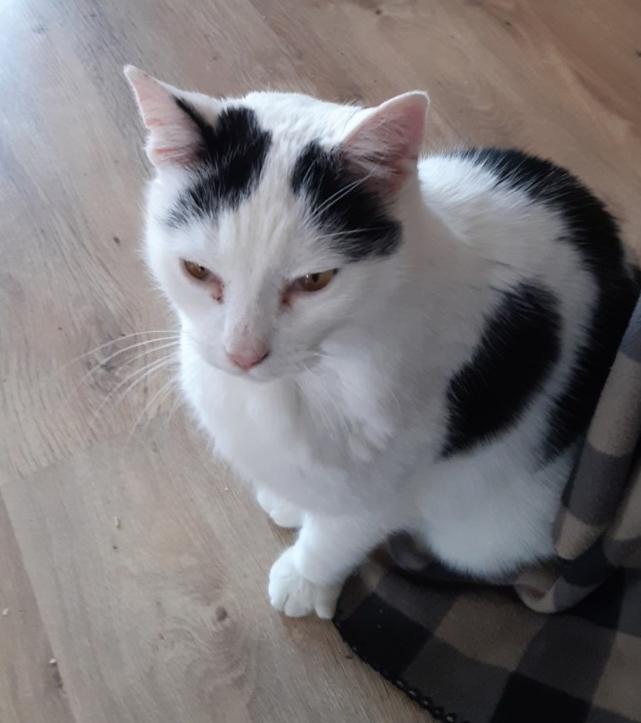 Bayas sitter på gulvet med halvlukkede øyne.