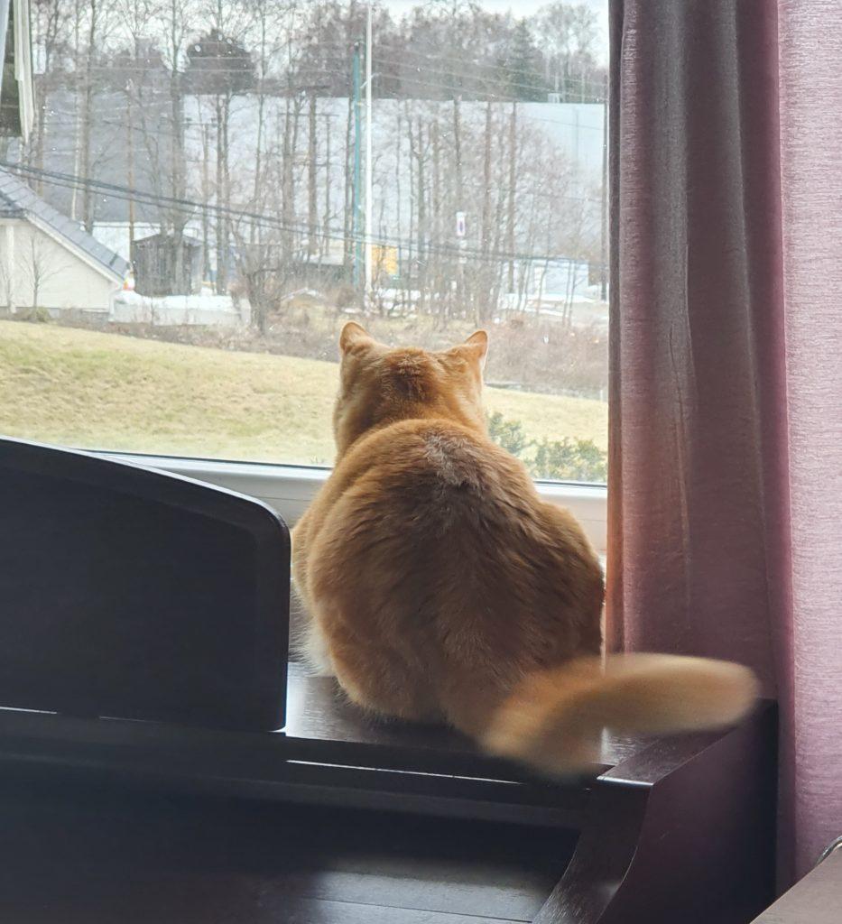 Rambo titter ut av vinduet, vi ser han bakfra, trær og gressplen kan skimtes utenfor vinduet.