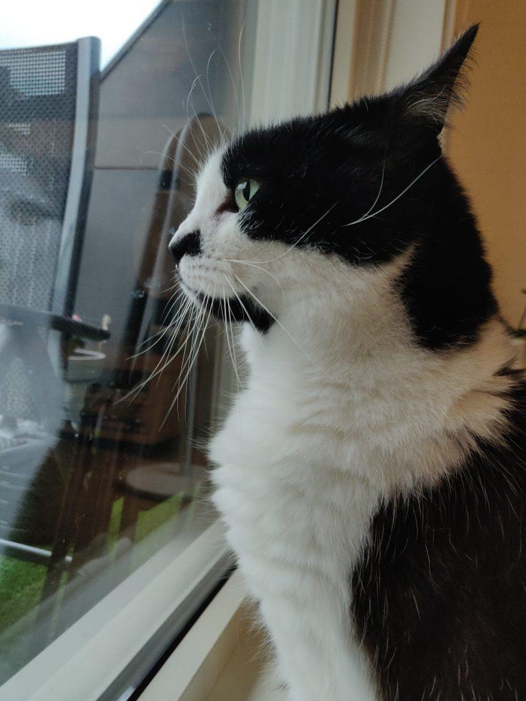 Gabby ser ut av vinduet.