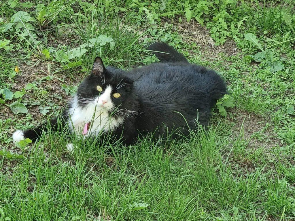 Lurven ligger i grønt gress.