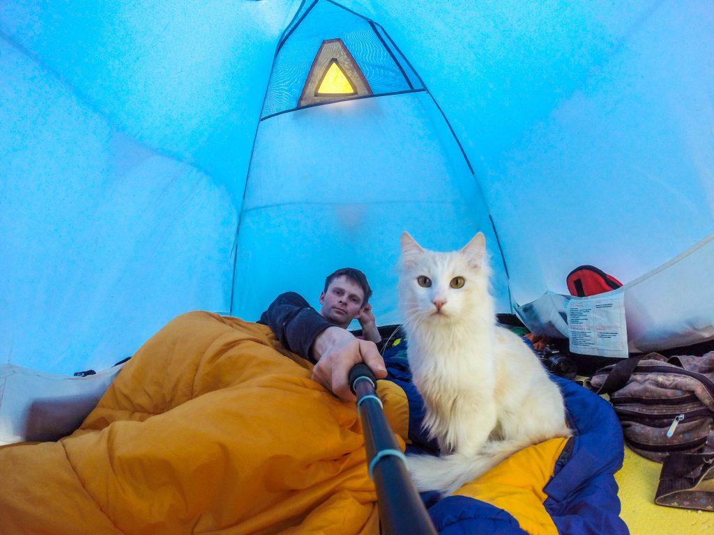 KAtt på teltur med eier. De ligger inne i et blått telt og han tar bilde med et kamera på en selfiestick. Eier ligger i oransjesovepose og lener hode motvenstre hånd, den hvite vakre katten ser rett inn i kameraet.