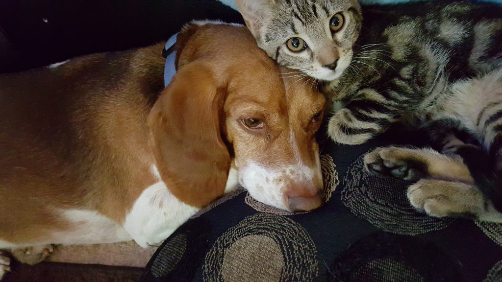 Hund og katt sover sammen på en sofa