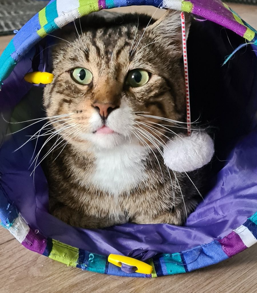 Lucas ligger i en blå kattetunnel og ser ut, En lekeball henger i en tråd fra leketunnelen.