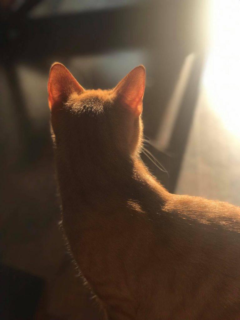 Vakkert litt tåkete foto der Nestor ser vekk fra kameraet men solen eller lyset skinner på kanten av kroppen hans. Rim light.