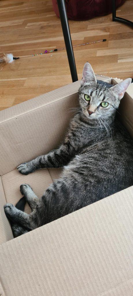 Nelly ligger i en pappeske.