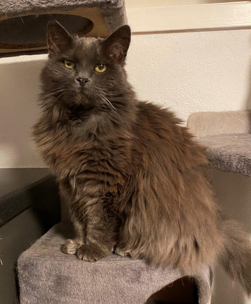 Vakre Kitty sitter på kloretårnet sitt.