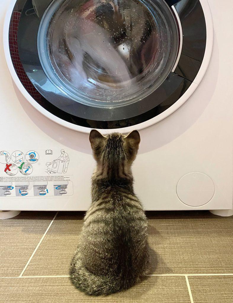 Vi ser ryggen til Ferdinand der han sitter foran vaskemaskinen og ser opp på vinduet der klærne går rundt og rundt.