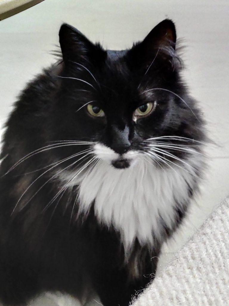 Portrett av Ludo. Han har sort langhåret pems med hvit bart og hvit krage.