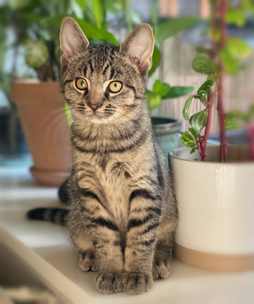 Romeo sitter i vinduskarmen. Potteplanter kan skimtes bak han.