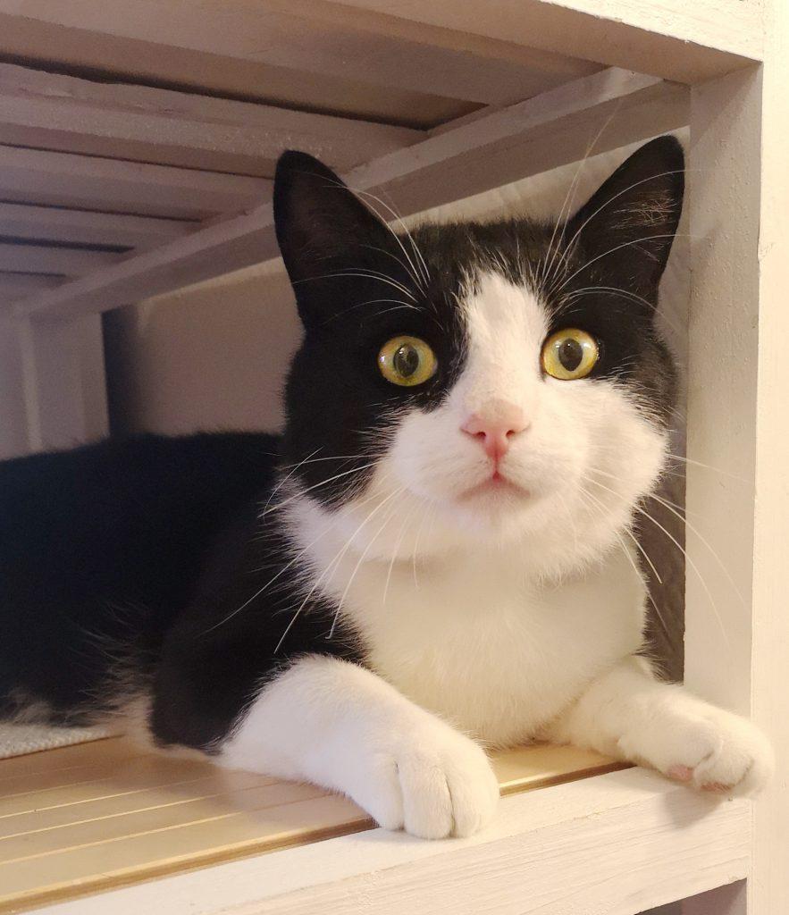 Sofus ligger under t bord og ser rett inn i kameraet med store oppsperrede øyne.